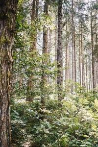 Bäume im Hausruckwald